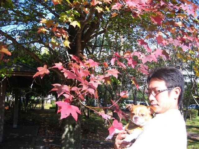 f:id:yasukazu01:20111115102837j:image