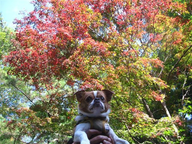 f:id:yasukazu01:20111115103835j:image