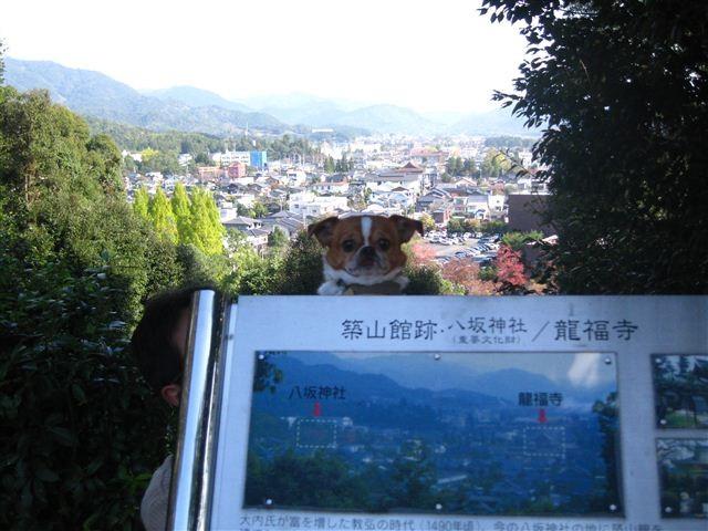 f:id:yasukazu01:20111115104231j:image