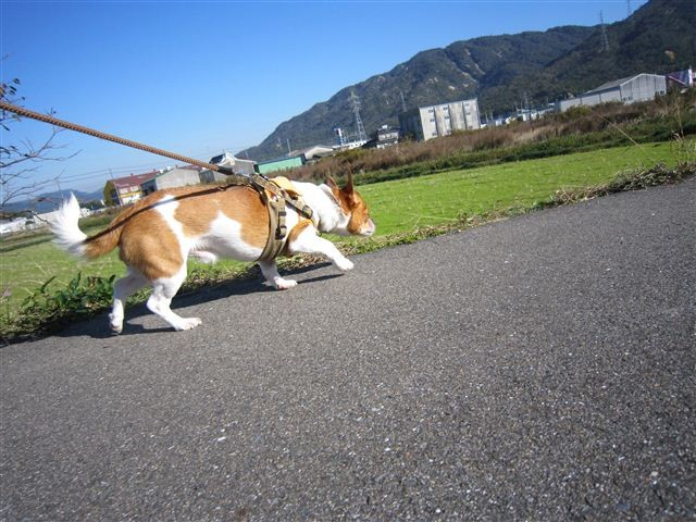 f:id:yasukazu01:20111126101817j:image