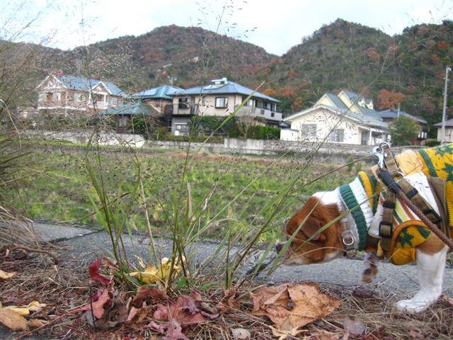 f:id:yasukazu01:20111204160607j:image