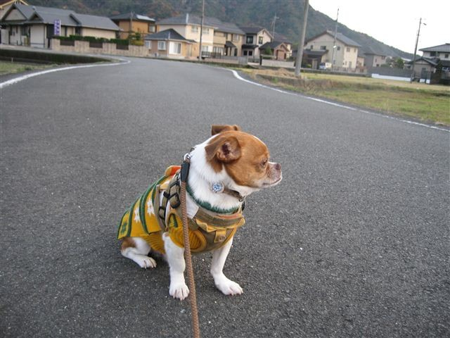 f:id:yasukazu01:20111204163250j:image