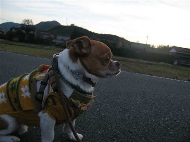 f:id:yasukazu01:20111204163259j:image