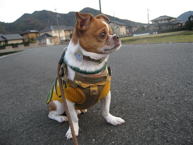 f:id:yasukazu01:20111204163317j:image