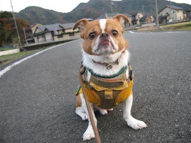 f:id:yasukazu01:20111204163328j:image