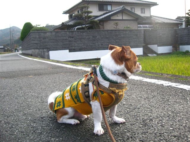 f:id:yasukazu01:20111207162424j:image