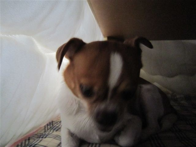 f:id:yasukazu01:20111210100755j:image