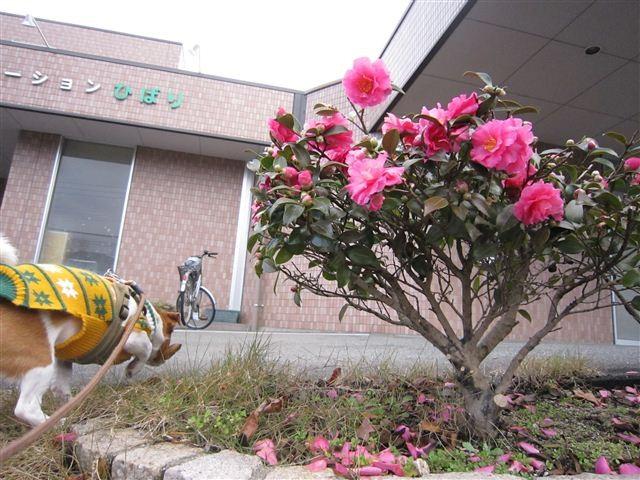f:id:yasukazu01:20111210103115j:image