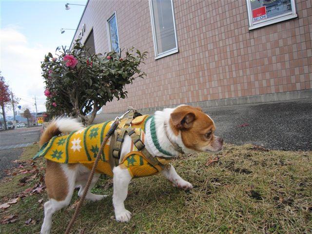 f:id:yasukazu01:20111210103139j:image