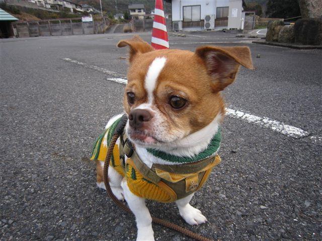 f:id:yasukazu01:20111210103403j:image