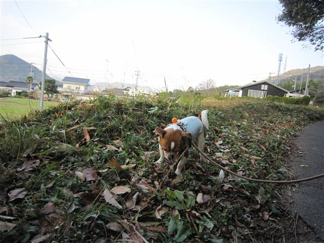 f:id:yasukazu01:20111214125629j:image