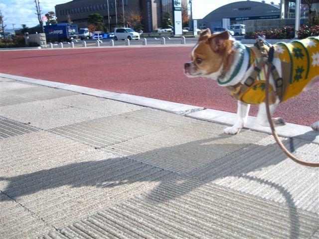 f:id:yasukazu01:20111219101247j:image