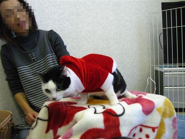 f:id:yasukazu01:20111219103138j:image