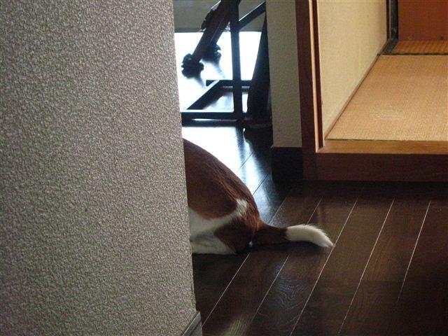 f:id:yasukazu01:20111222133641j:image