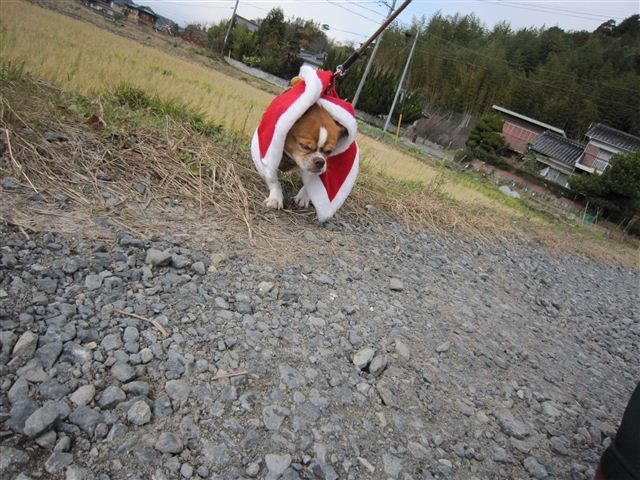 f:id:yasukazu01:20111224125340j:image