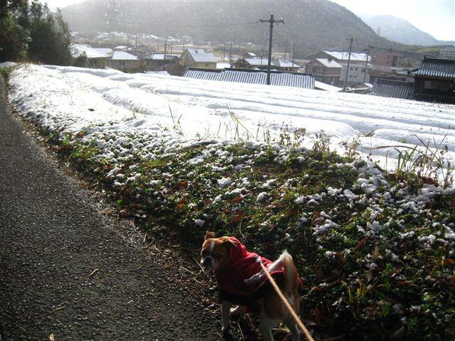 f:id:yasukazu01:20111225152934j:image