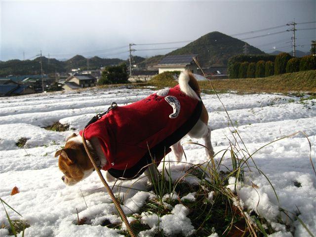 f:id:yasukazu01:20111225152947j:image