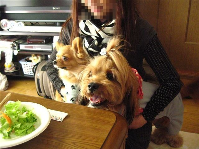 f:id:yasukazu01:20111229123548j:image
