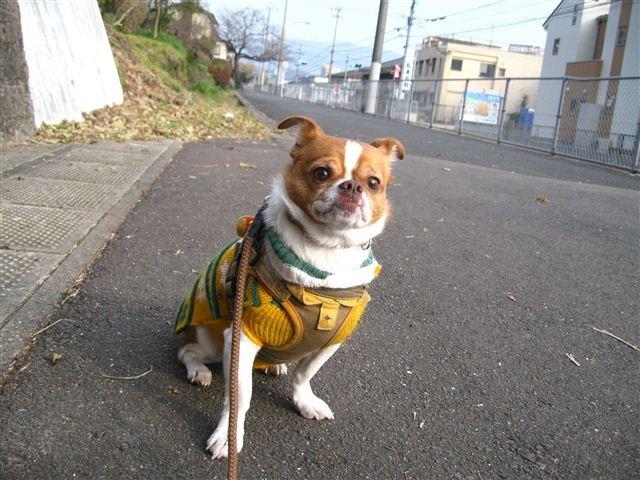 f:id:yasukazu01:20120103145057j:image