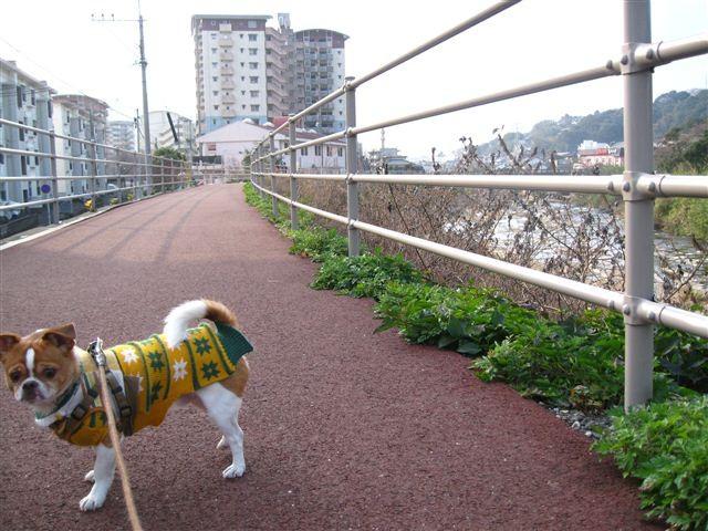 f:id:yasukazu01:20120103150508j:image