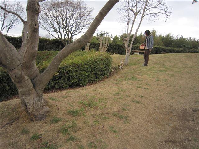 f:id:yasukazu01:20120105121920j:image
