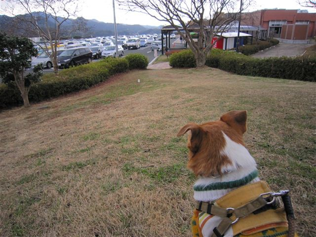 f:id:yasukazu01:20120105122522j:image