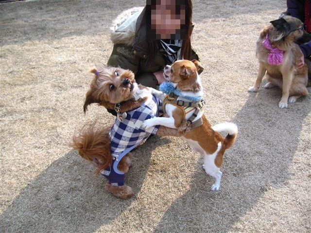 f:id:yasukazu01:20120109142520j:image