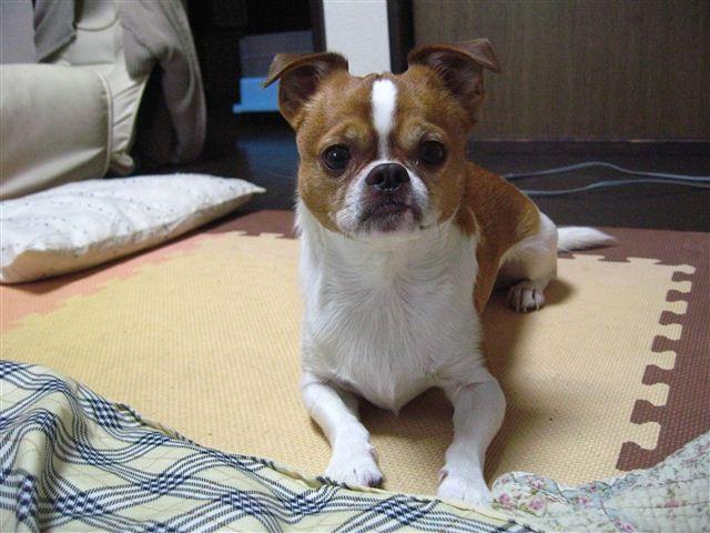 f:id:yasukazu01:20120116160043j:image