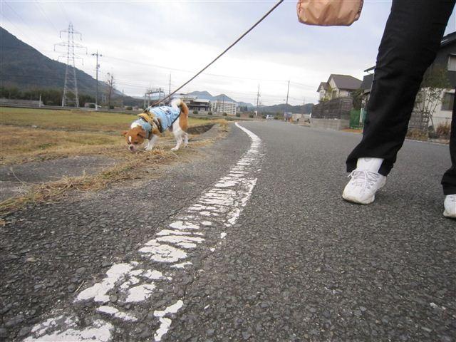 f:id:yasukazu01:20120122100954j:image