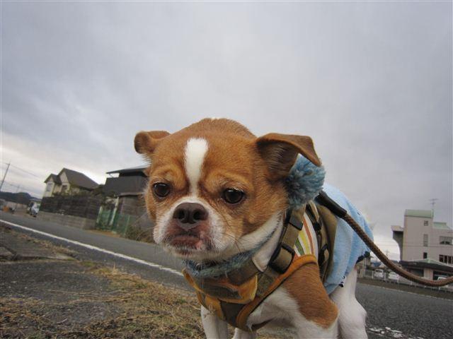 f:id:yasukazu01:20120122101006j:image