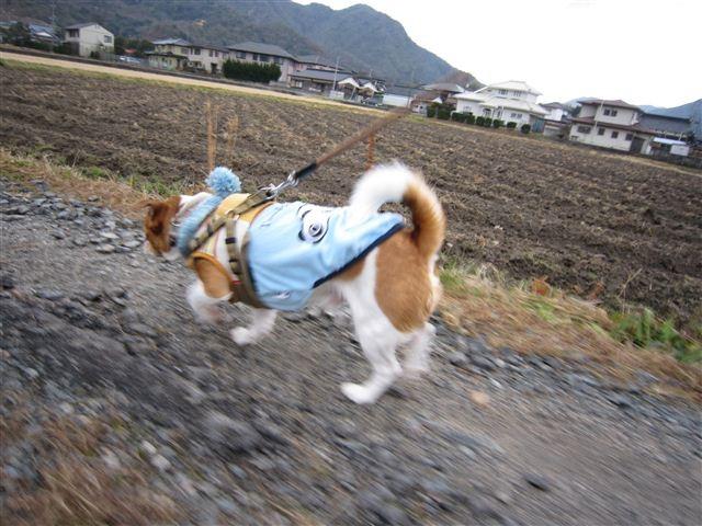 f:id:yasukazu01:20120122101436j:image