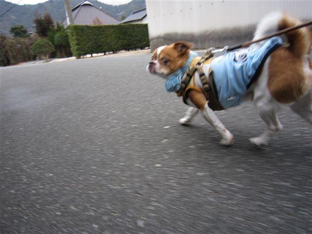 f:id:yasukazu01:20120122101950j:image