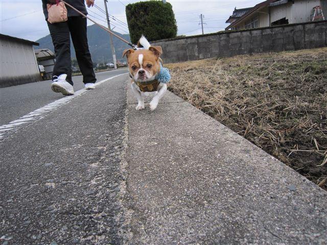 f:id:yasukazu01:20120122102014j:image