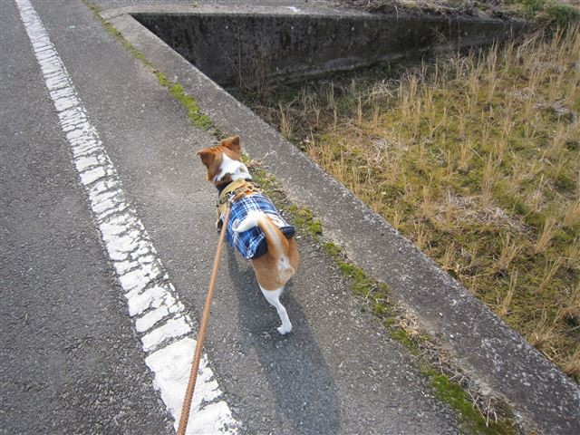f:id:yasukazu01:20120125133430j:image