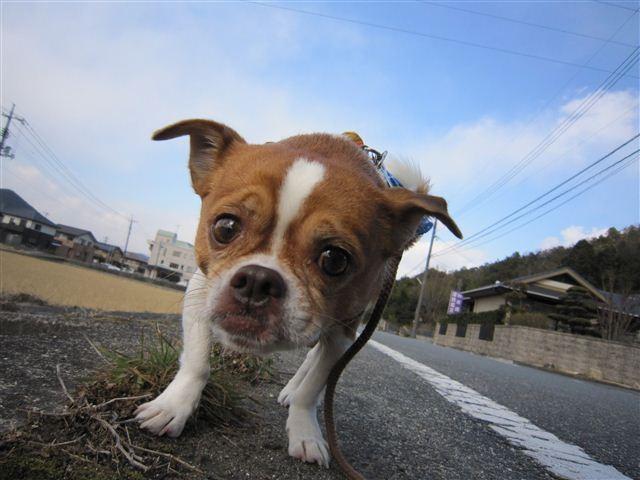 f:id:yasukazu01:20120125133440j:image