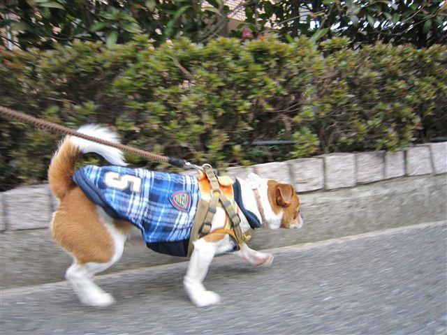 f:id:yasukazu01:20120125133511j:image
