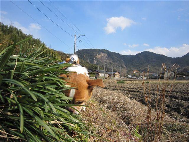 f:id:yasukazu01:20120125133832j:image