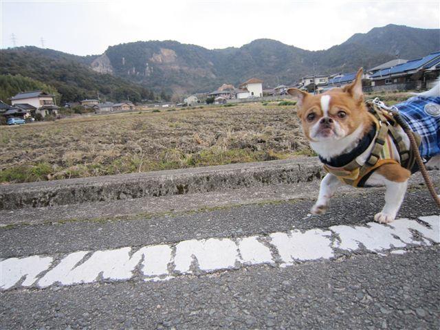 f:id:yasukazu01:20120125134649j:image