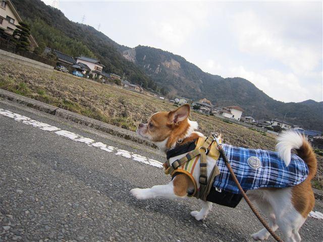 f:id:yasukazu01:20120125134654j:image