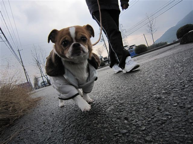 f:id:yasukazu01:20120127142704j:image
