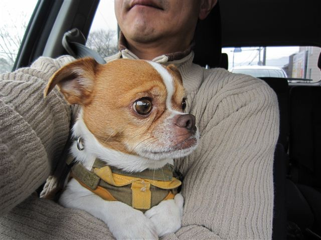 f:id:yasukazu01:20120128100939j:image