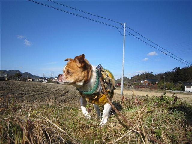 f:id:yasukazu01:20120130105614j:image