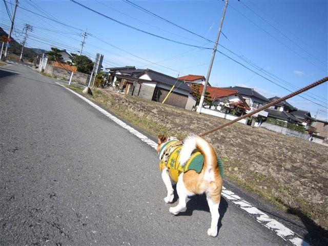 f:id:yasukazu01:20120130110045j:image