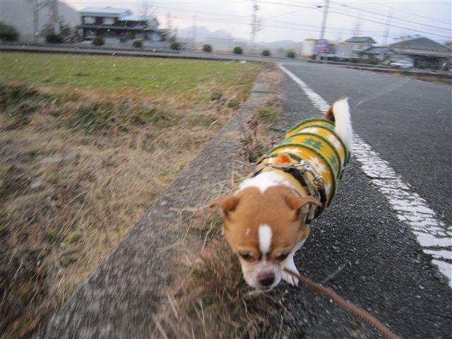 f:id:yasukazu01:20120201170322j:image