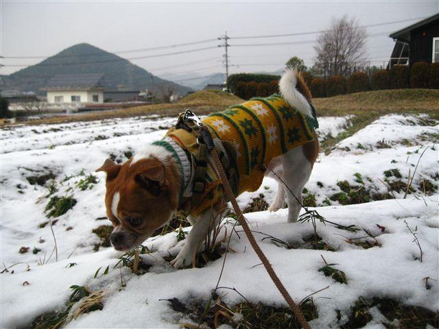 f:id:yasukazu01:20120204143532j:image