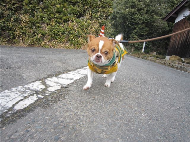 f:id:yasukazu01:20120204144042j:image
