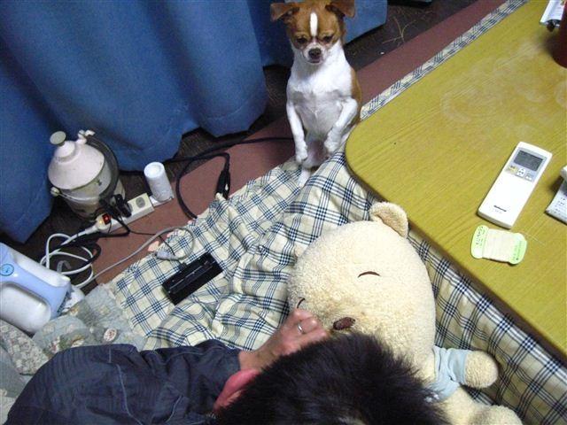 f:id:yasukazu01:20120206185909j:image
