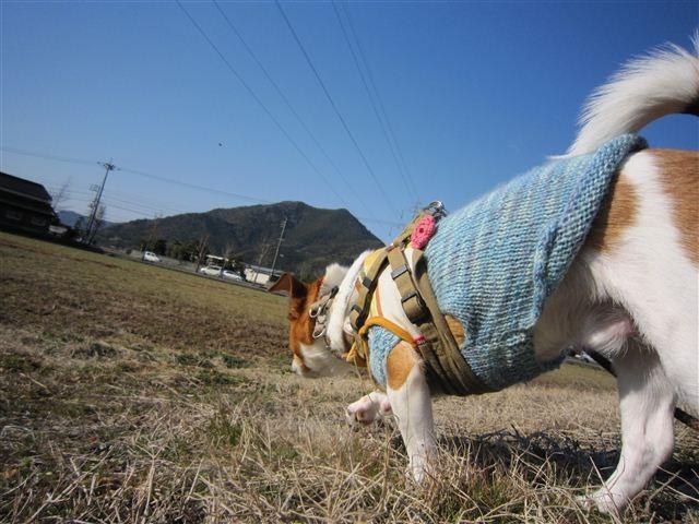 f:id:yasukazu01:20120211095026j:image