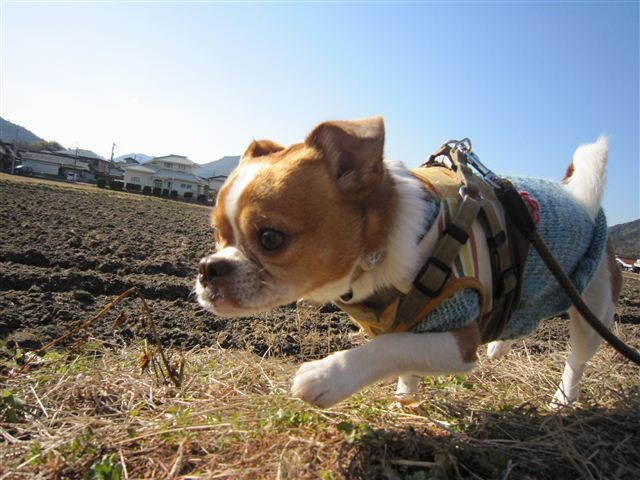 f:id:yasukazu01:20120211095725j:image