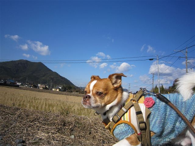 f:id:yasukazu01:20120211095926j:image